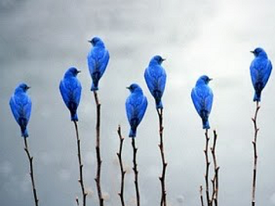 A bunch of birds on branches stand out